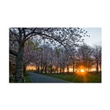 Sunset Behind Path of Cherry Blos Wall Decal