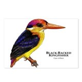 Black-Backed Kingfisher Postcards (Package of 8)