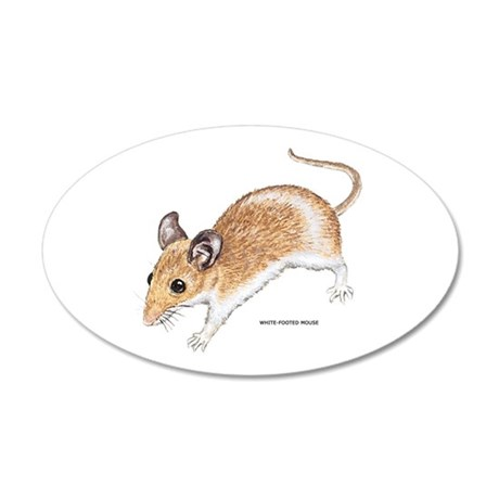 White-Footed Mouse 35x21 Oval Wall Decal