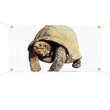 Galapagos Tortoise Banner