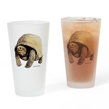 Galapagos Tortoise Drinking Glass