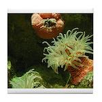 Under the Sea...Anemone