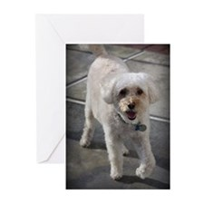 Smiling Cockapoo Dog Greeting Cards (Pk of 10)