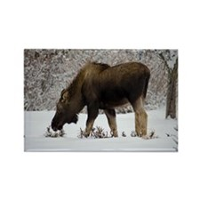 Hungry Moose Rectangle Magnet