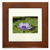 Water Lily Framed Tile