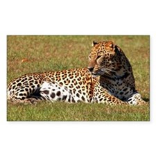 Leopard lying on grass in a zo Decal