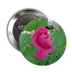 Beautiful Rose Photo Button