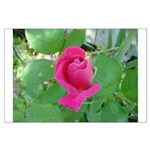 Beautiful Rose Photo Large Poster
