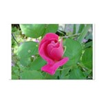 Beautiful Rose Photo Mini Poster Print