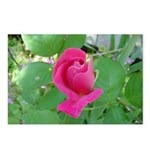 Beautiful Rose Photo Postcards (Package of 8)
