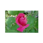 Beautiful Rose Photo Rectangle Magnet (100 pack)