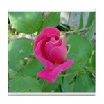 Beautiful Rose Photo Tile Coaster