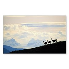 THREE LLAMA STANDING ON A HILL Decal