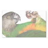 Senegal parrot (Poicepha Decal