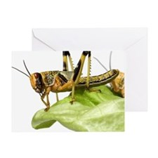 Locust (Acrididae family) on lettuce Greeting Card