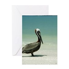 Brown pelican (Pelicanus occidentali Greeting Card