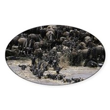 Wildebeests (Connochaetes taurinus) Decal