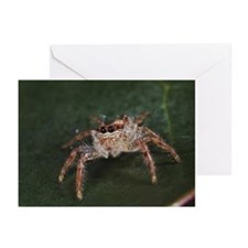 Jumping spider (Salticid Greeting Cards (Pk of 10)