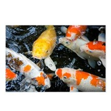 Koi fish, close-up, overh Postcards (Package of 8)