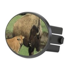 Female Bison with calf (Bison bis Hitch Cover