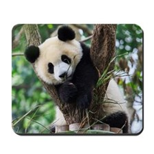 Panda cub resting on tree Mousepad