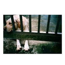 Dog leaning on cage Postcards (Package of 8)