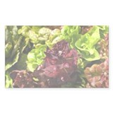Mixed organic lettuces growing Decal