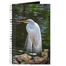 Great Egret in Florida Journal