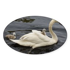 Cygnet on mums back Decal