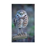 Owl standing on wooden post Decal