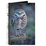 Owl standing on wooden post Journal
