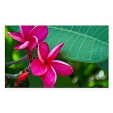 Plumerias fucsia Decal