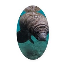 Manatee Crystal River Oval Car Magnet