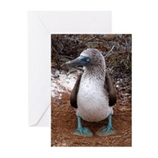 Blue footed boobies Greeting Cards (Pk of 20)