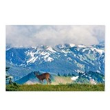 Deer in olympic national  Postcards (Package of 8)