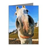 Big nose horse Note Cards (Pk of 20)