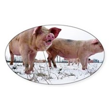 Pigs standing in snow field Decal