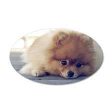 Sad Pomeranian lying on floo Wall Decal