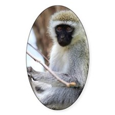 Vervet monkey on tree Decal