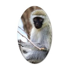 Vervet monkey on tree Wall Decal