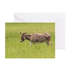 Donkey in Field, Bavaria Greeting Cards (Pk of 10)