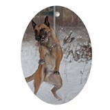 Malinois in winter Ornament (Oval)