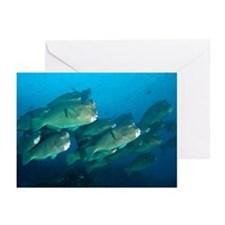School of bumphead parro Greeting Cards (Pk of 20)