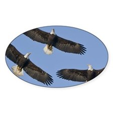 Bald Eagles in flight against Decal