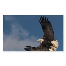 Bald eagle in flight aga Decal