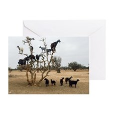 Flock of goats Greeting Card