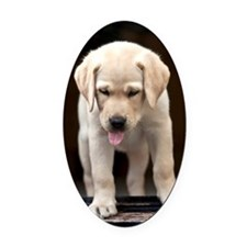 Golden Labrador Puppy Oval Car Magnet