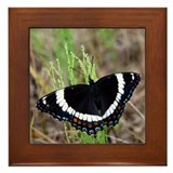White Admiral Framed Tile