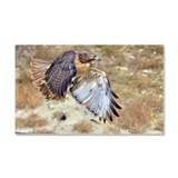 Redtail Hawk launch Car Magnet 20 x 12