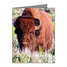 Bull bison Note Cards (Pk of 10)